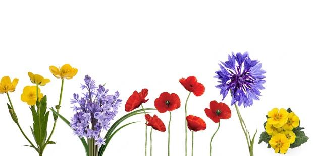 flower_heading